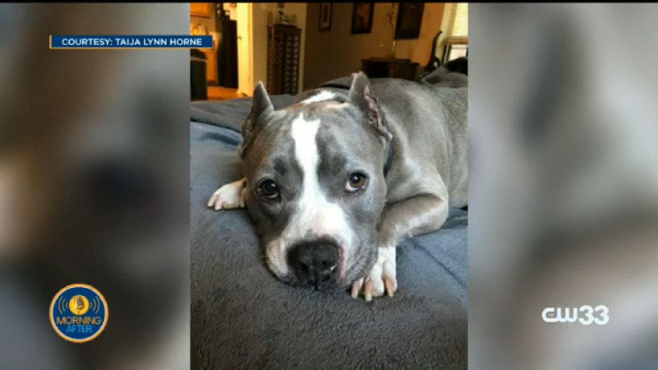 An Arlington woman's car was stolen with an emotional support dog inside, reward offered for anyone who can return her